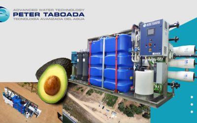 AVOCADO IRRIGATION, BY PETER TABOADA
